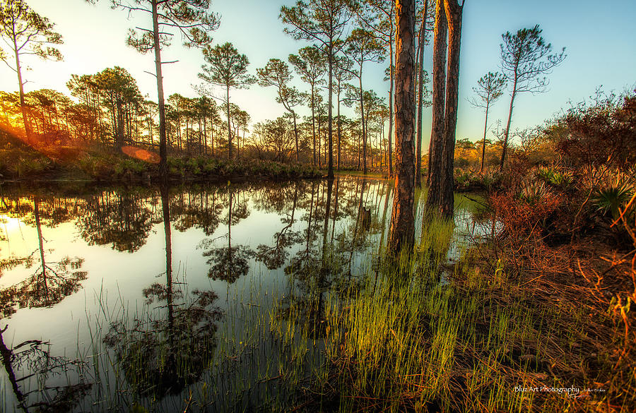 Woods Photograph - At The Sunrise by Volker blu Firnkes