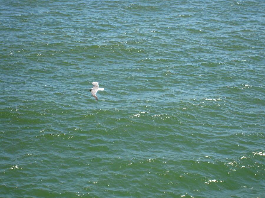 Atlantic City - 12129 Photograph
