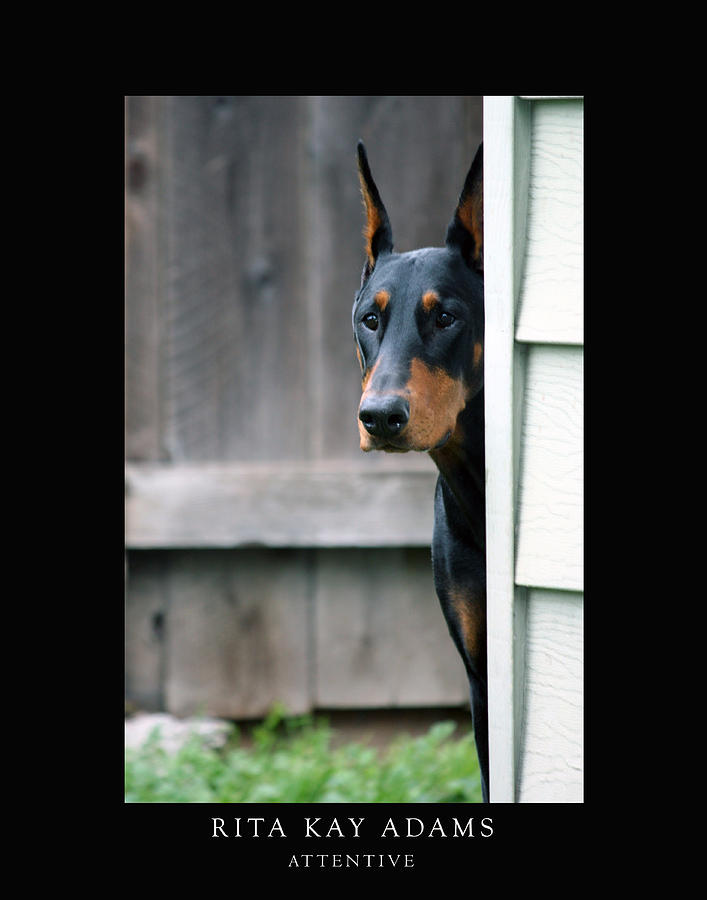 Attentive Photograph