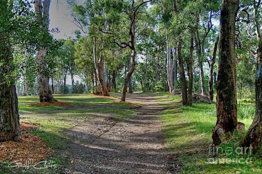 Australian Bush Track Landscape Photograph By Geoff Childs