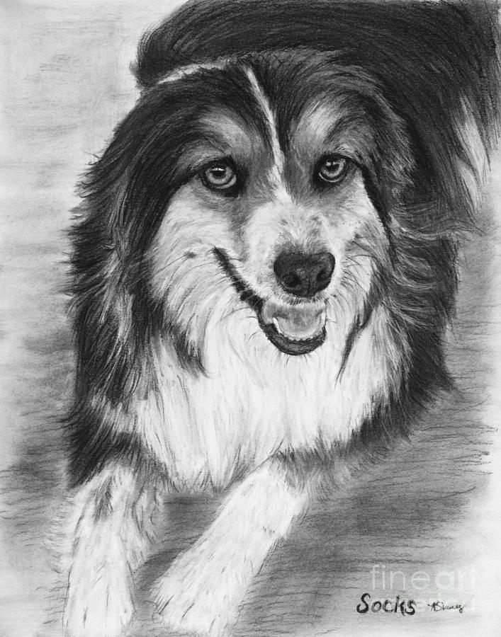 Australian shepherd drawing australian shepherd dog sketch by kate