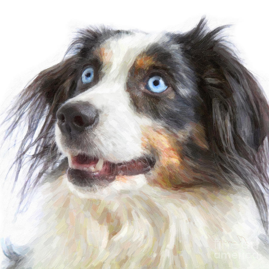 Australian Shepherd Digital Art