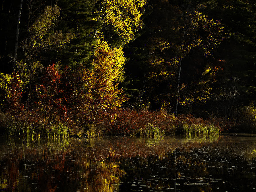 Autumn Photograph - Autumn At Its Finest by Thomas Young