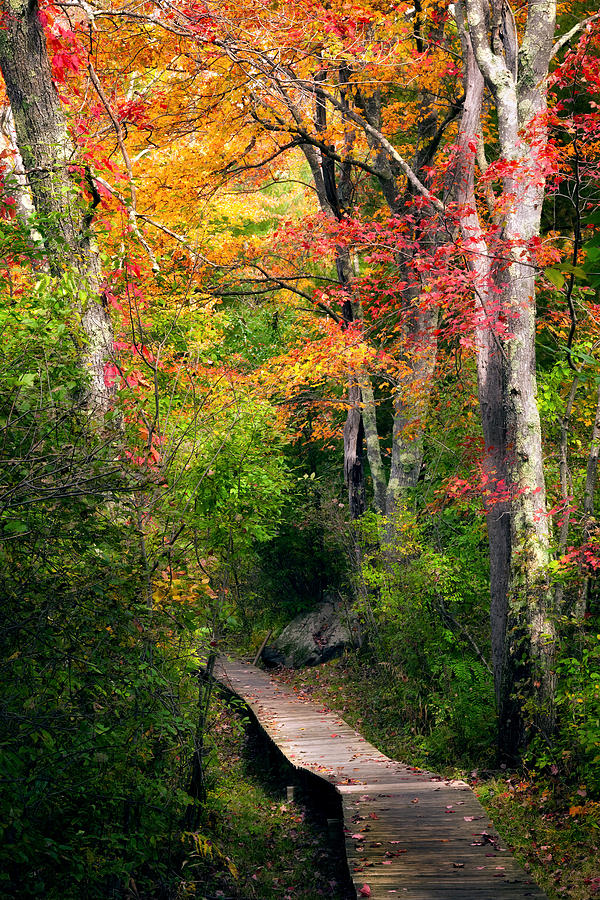 Autumn Boardwalk Photograph  - Autumn Boardwalk Fine Art Print