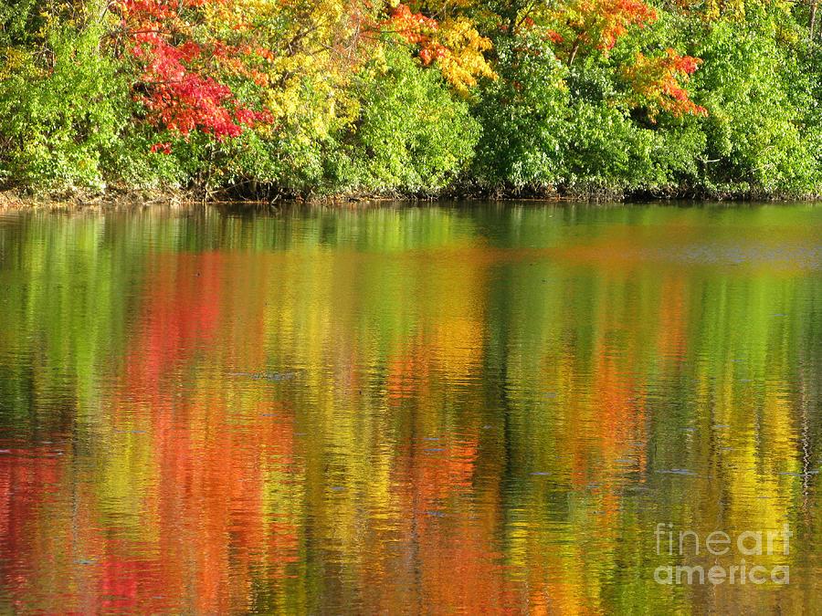 Autumn Photograph - Autumn Brilliance by Ann Horn
