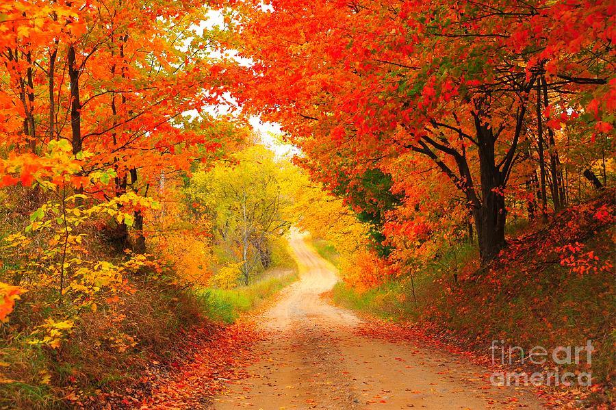 Autumn Cameo 2 Photograph