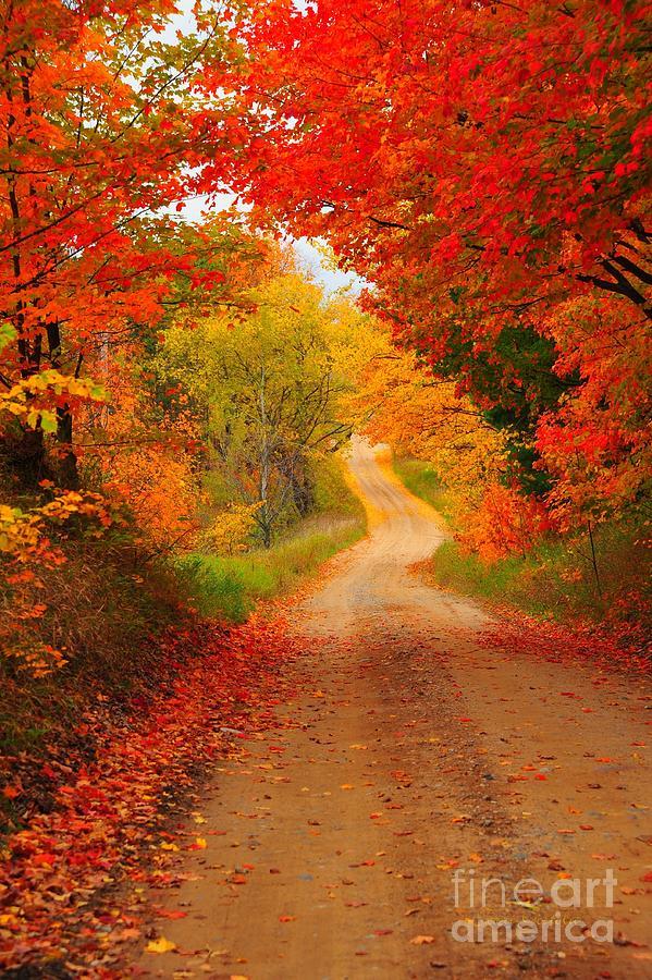 Autumn Photograph - Autumn Cameo by Terri Gostola