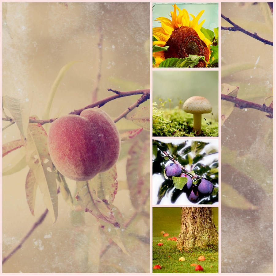 Autumn Collage Photograph  - Autumn Collage Fine Art Print