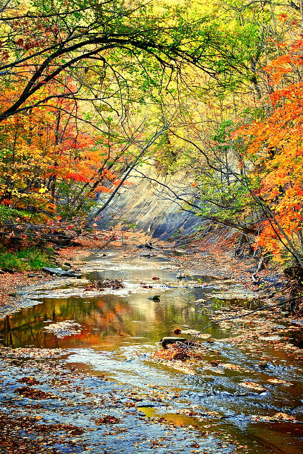 Autumn Colors Collide Photograph  - Autumn Colors Collide Fine Art Print