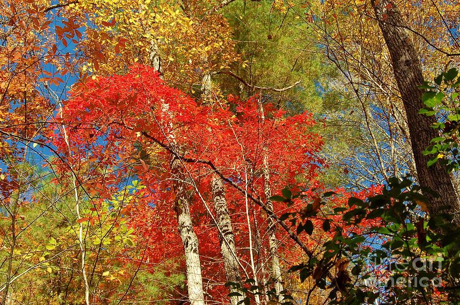 Autumn Photograph - Autumn Colors by Patrick Shupert