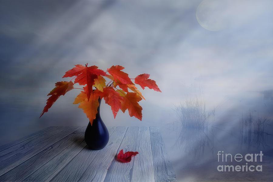 Autumn Colors Photograph