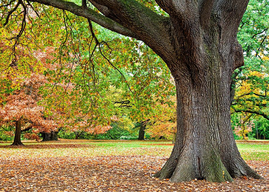 Autumn Photograph