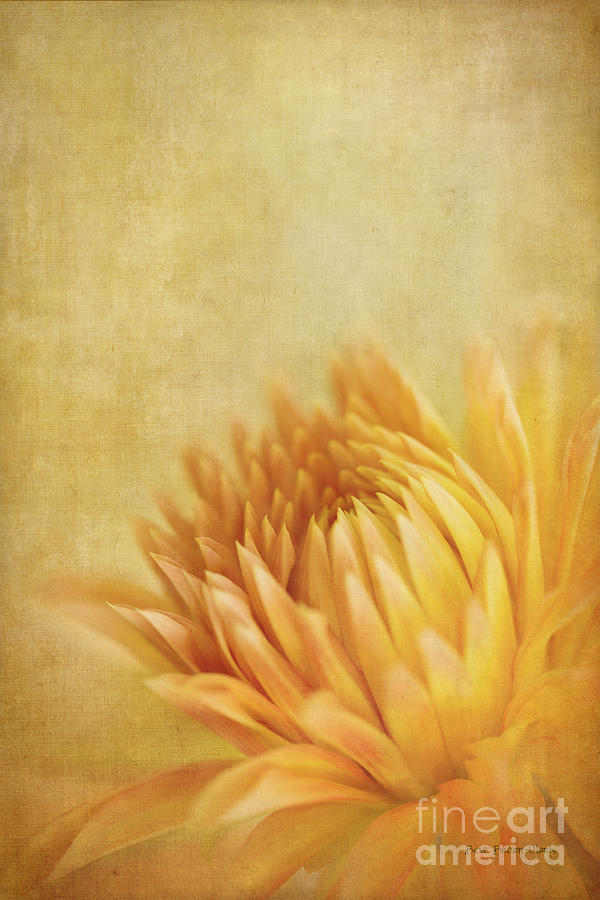 Autumn Delight Photograph  - Autumn Delight Fine Art Print