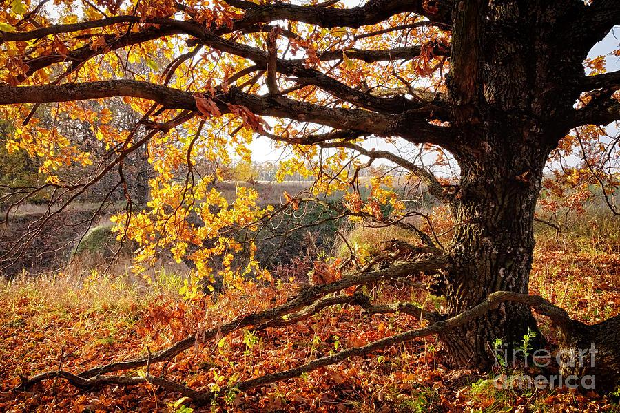Autumn Etude Photograph