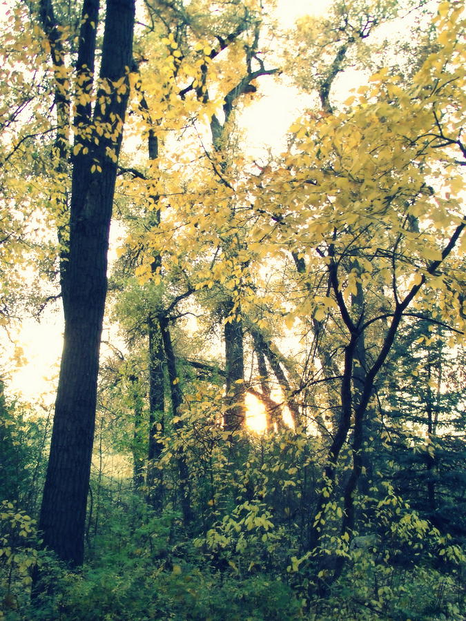 Autumn Evening Photograph
