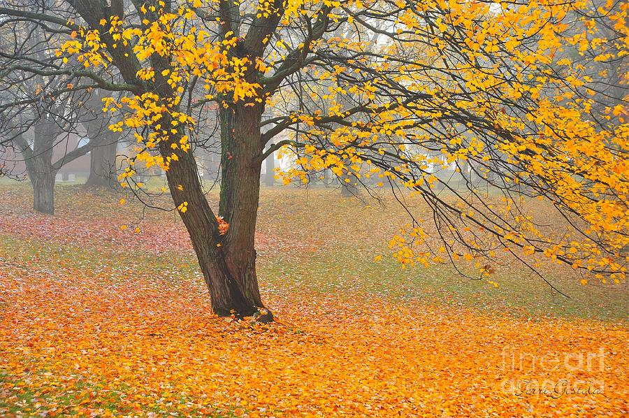 Autumn Fallen Photograph  - Autumn Fallen Fine Art Print