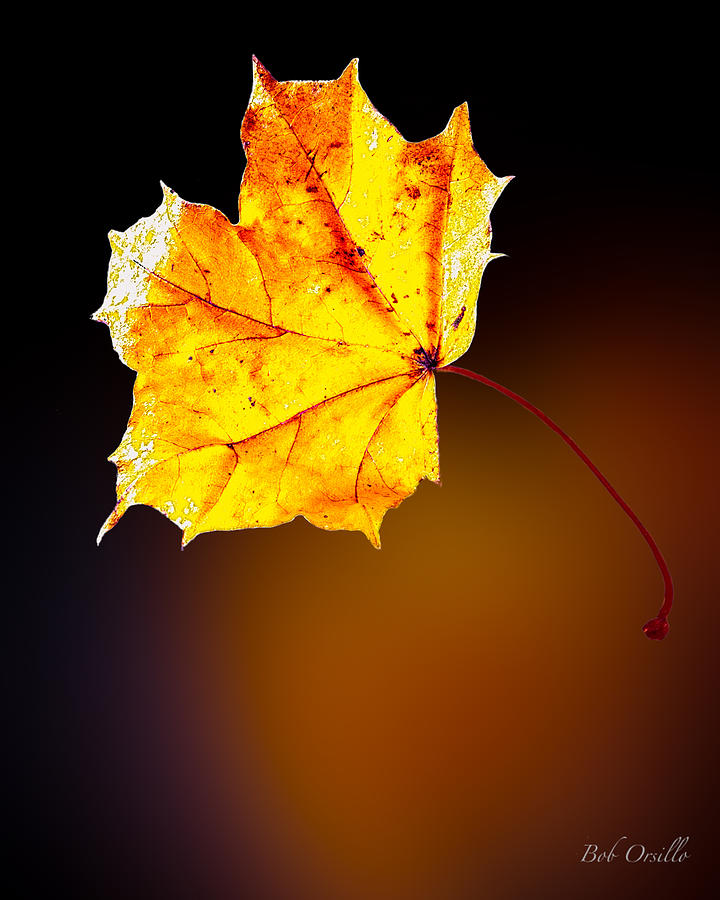 Autumn Fires  Photograph  - Autumn Fires  Fine Art Print