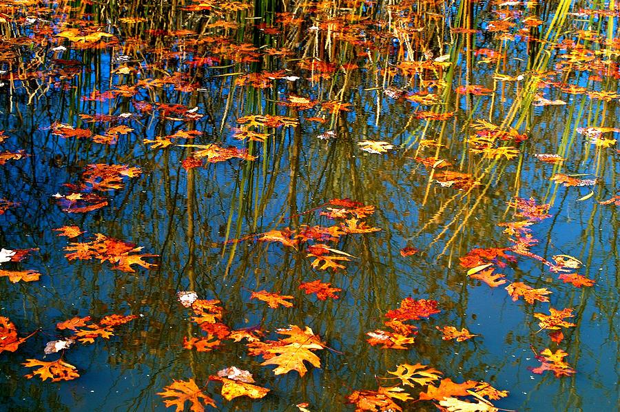 Autumn  Floating Photograph