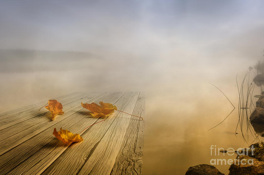 Autumn Fog Photograph