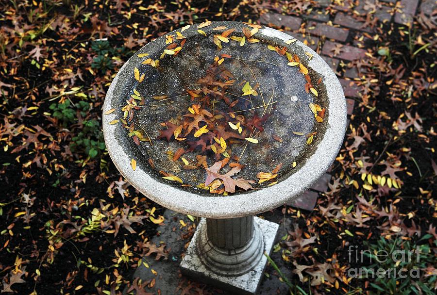 Autumn In Boston Photograph
