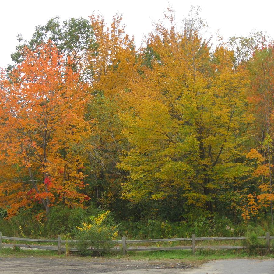 Autumn In Maine Photograph By Patricia Sundik