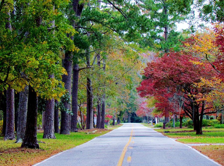 Autumn Photograph - Autumn In The Air by Cynthia Guinn