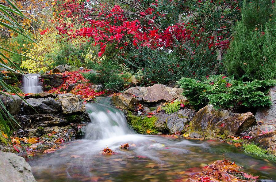Autumn In The Botanic Gardens Photograph