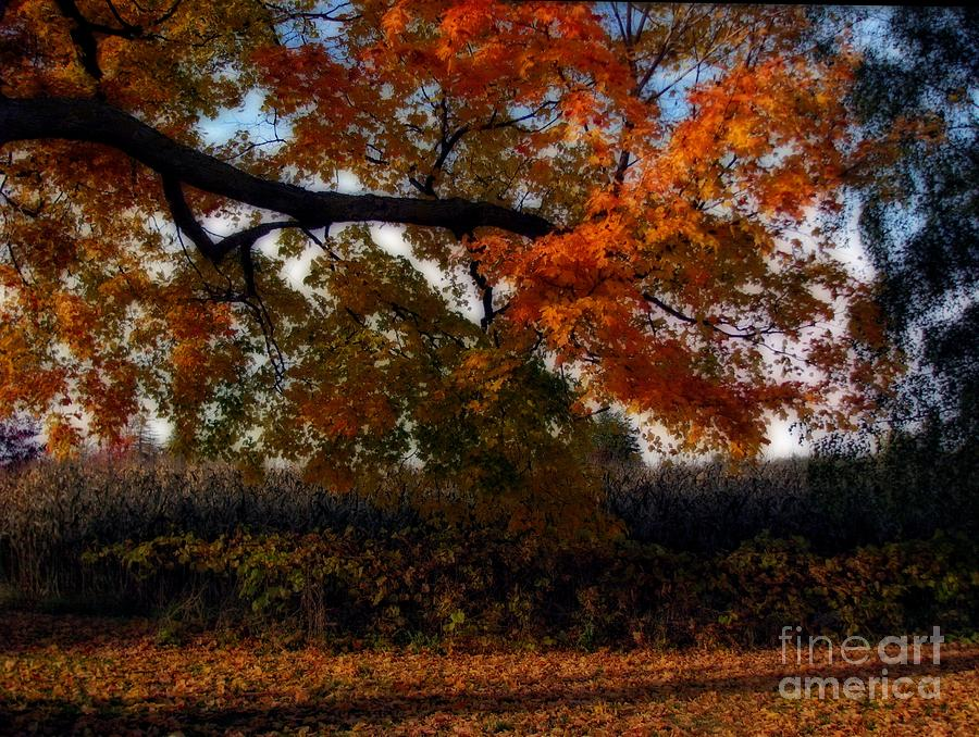 Autumn In The Country Photograph