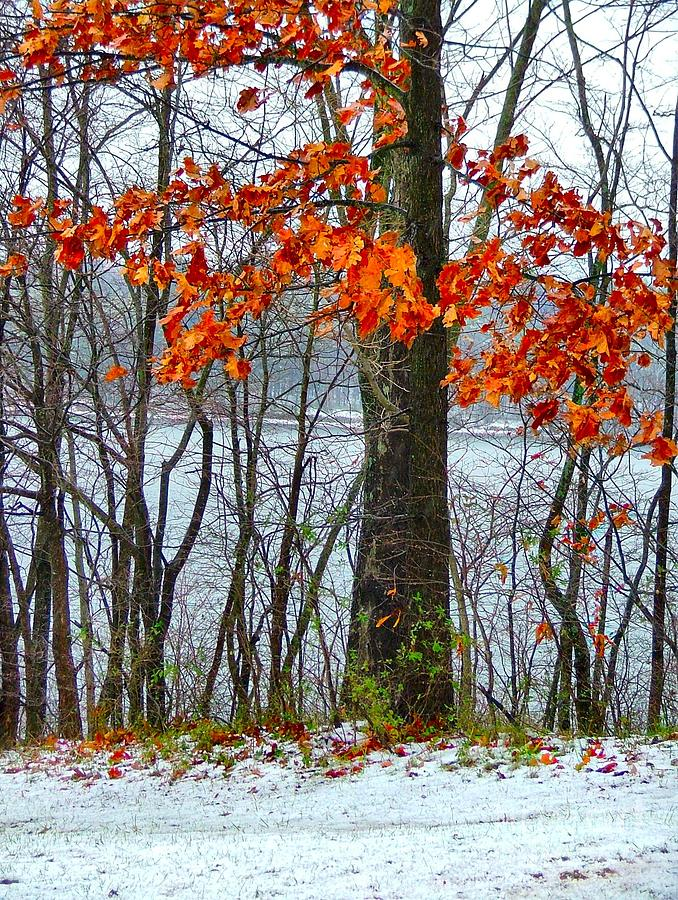 Autumn Leaves Photograph - Autumn In Winter by Julie Dant