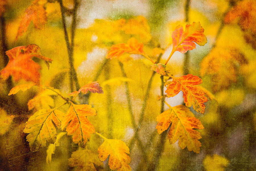 Autumn In Yellow Photograph