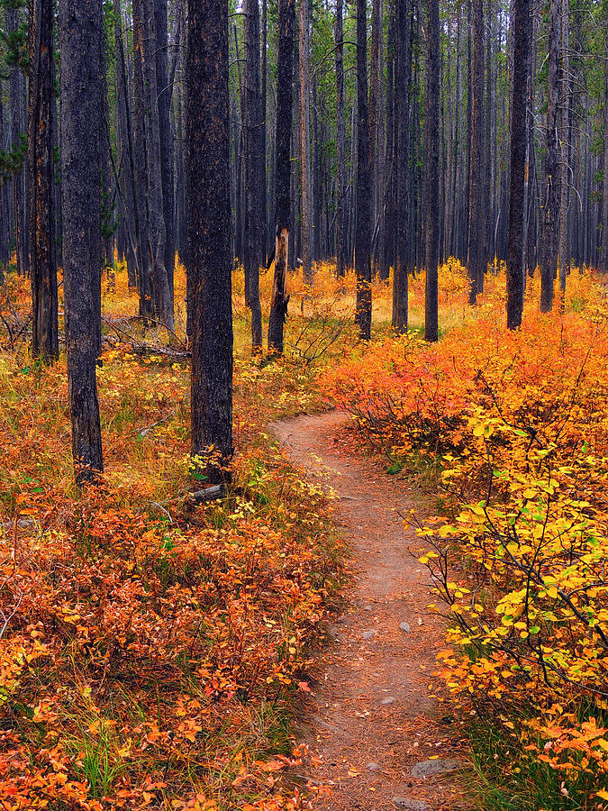 Autumn In Yellowstone Photograph