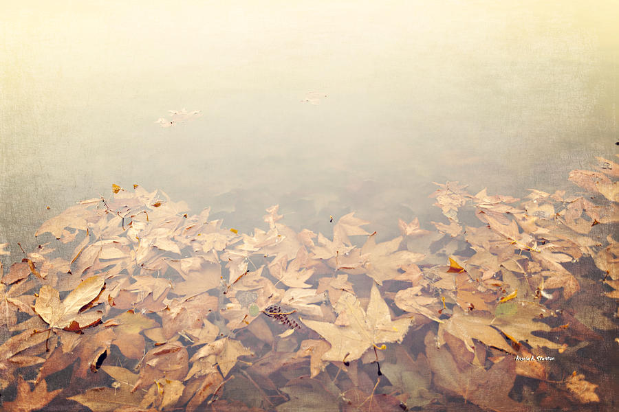 Autumn Leaves Floating In The Fog Photograph