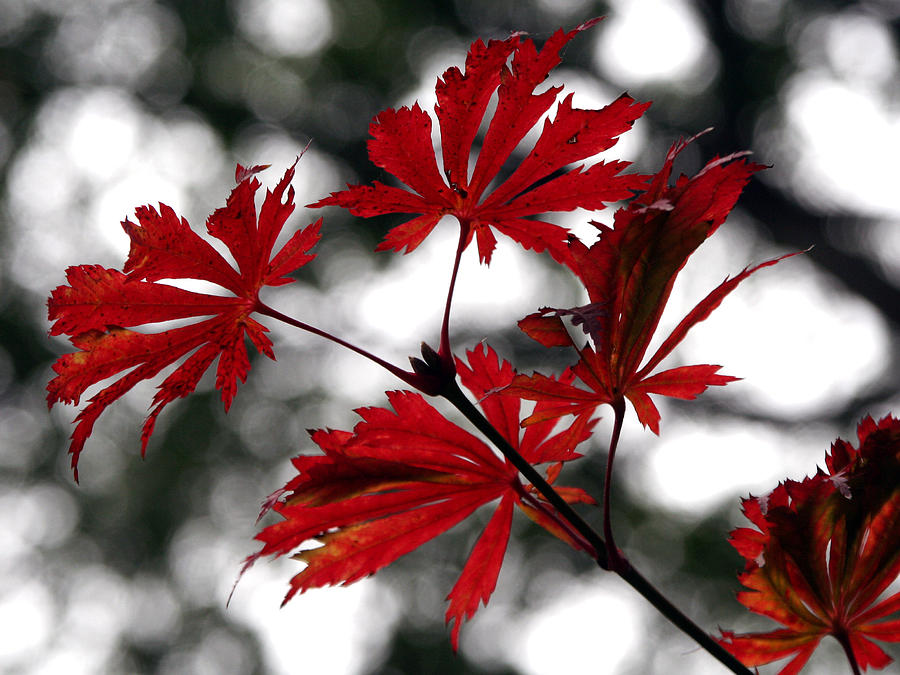 Autumn Leaves Photograph