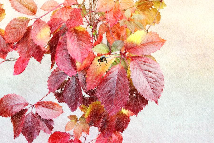 Autumn Leaves Digital Art  - Autumn Leaves Fine Art Print