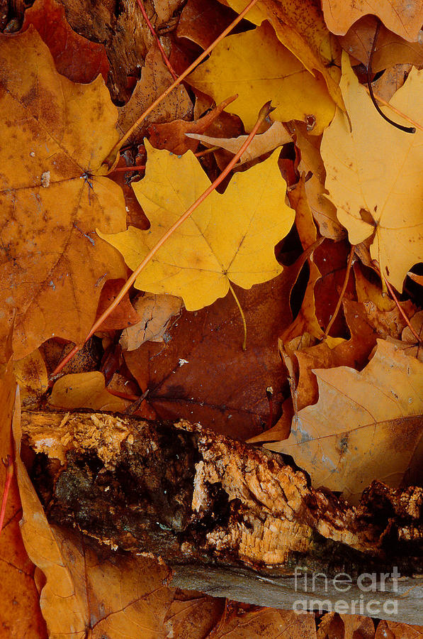 Abstract Photograph - Autumn Leaves Of Yellow And Brown by ImagesAsArt Photos And Graphics