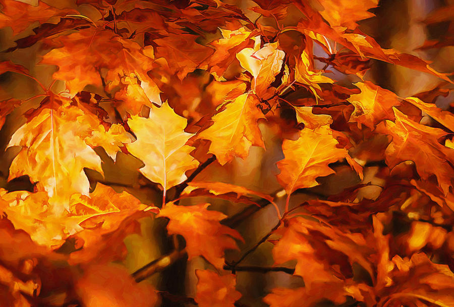 Autumn Leaves Oil Photograph  - Autumn Leaves Oil Fine Art Print