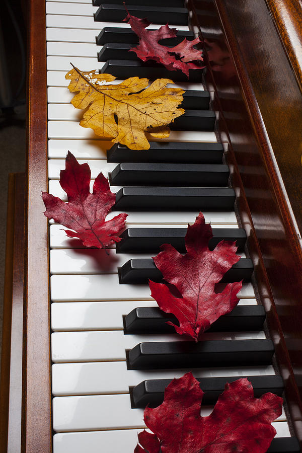 Autumn Leaves On Piano Photograph