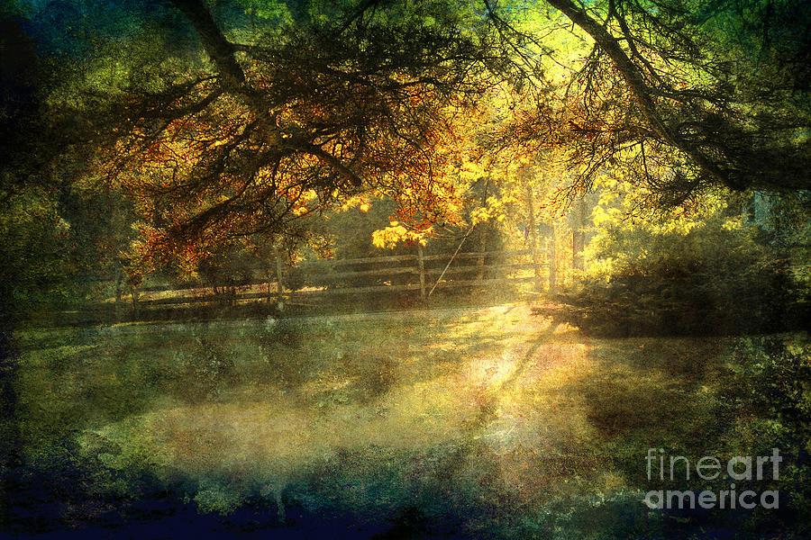Landscape Photograph - Autumn Light by Ellen Cotton