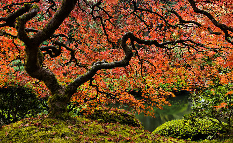 Asian Photograph - Autumn Magnificence by Don Schwartz