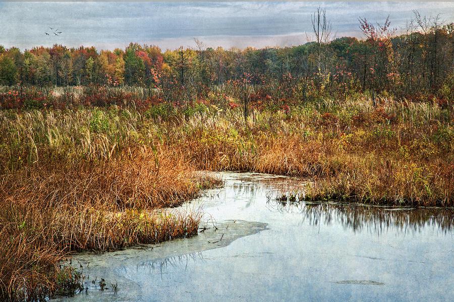 Autumn Marshland Photograph