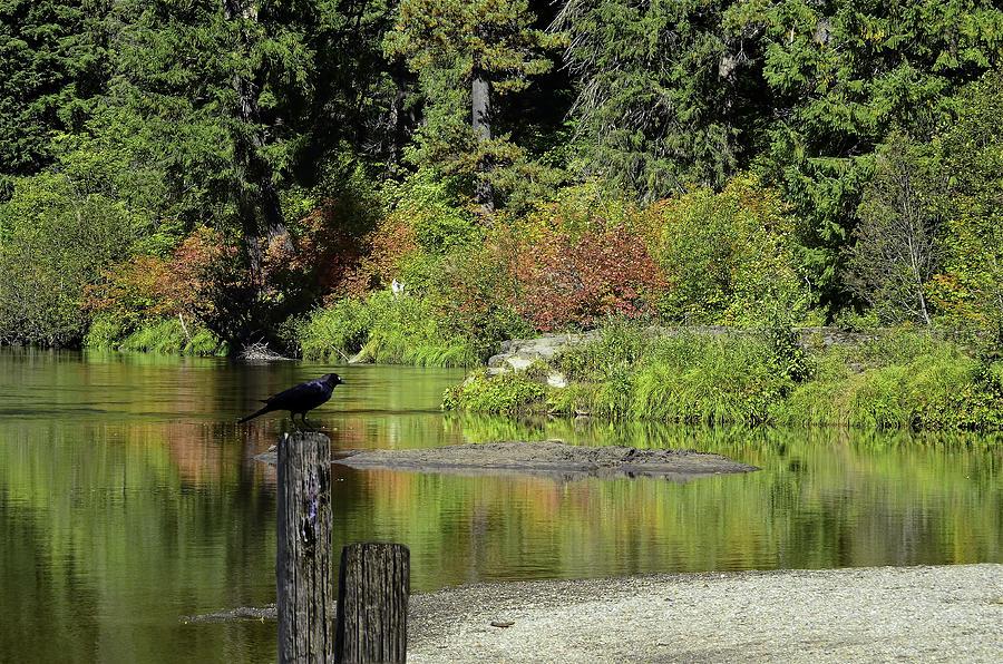 Autumn Photograph - Autumn Melody by Diane Schuster