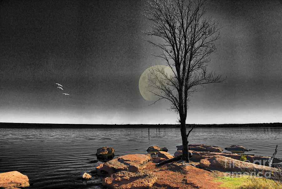 Autumn Moon Photograph