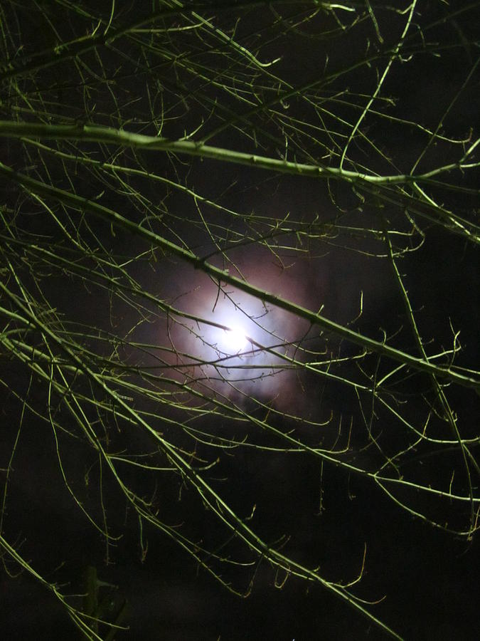 Autumn Moon Peeks Through The Branches Photograph