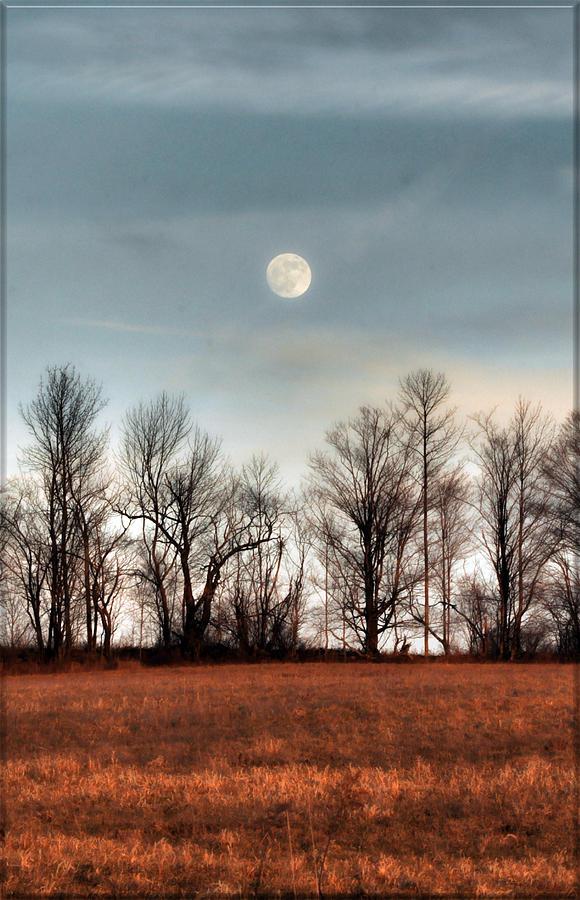 Autumn Moon Pyrography