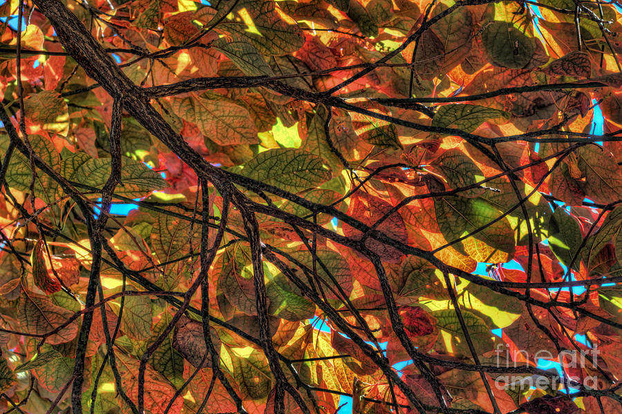 Autumn Mosaic Photograph by Denny Beck