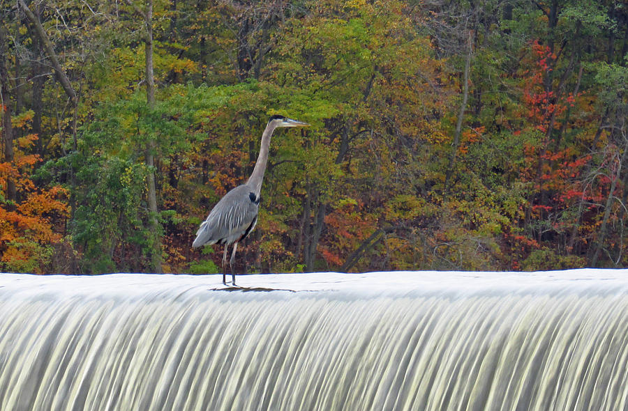 Heron Photograph - Autumn On The Maumee by Cathy Cooley