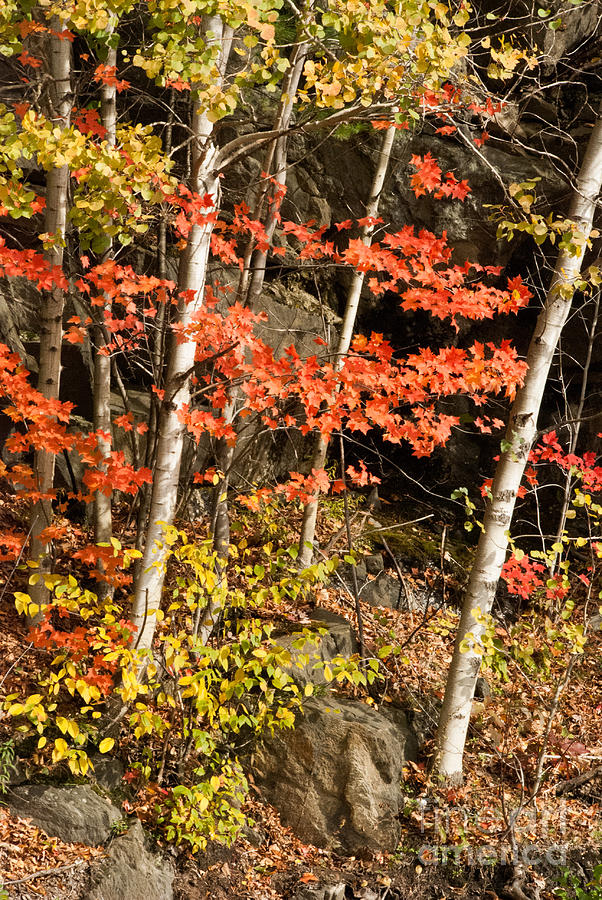 Autumn Or Fall Colors In The Green Mountains Of Vermont Photograph