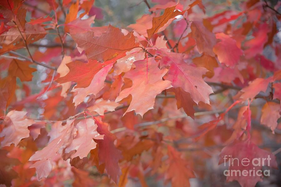 Oak Photograph - Autumn Paintbrush by Jola Martysz