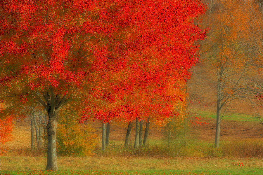 Autumn Popping Photograph  - Autumn Popping Fine Art Print