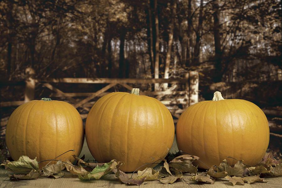 Autumn Pumpkins Photograph